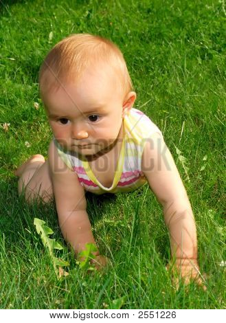 Baby On The Green Grass