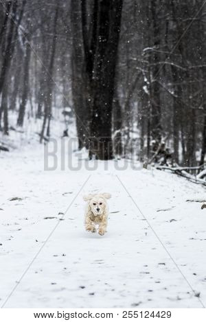 Small Dog Running Uphill In Winter Storm