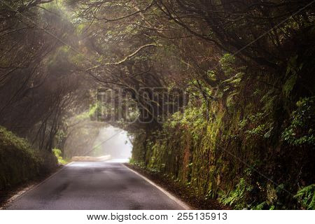 Road With Tree Tunnel During Foggy Day.