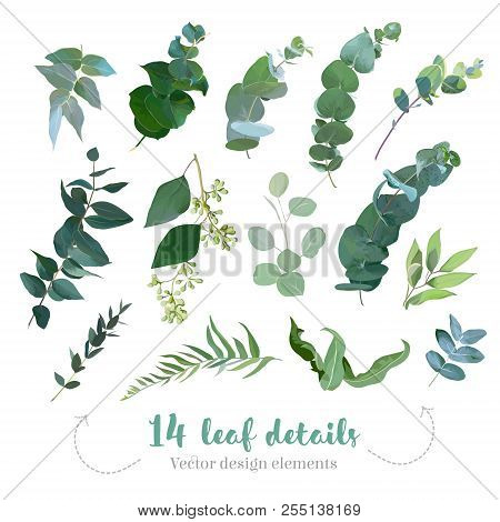 Greenery Leaves Vector Big Collection. Seeded Eucalyptus, Parvifolia Foliage, Plants Mix.  Hand Pain