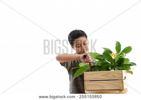 Asian Boy With Young Plant Seedling.