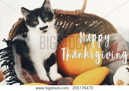 Happy Thanksgiving Text, Seasons Greeting Card. Thanksgiving Sign. Cute Kitty, Pumpkin, Wicker Baske