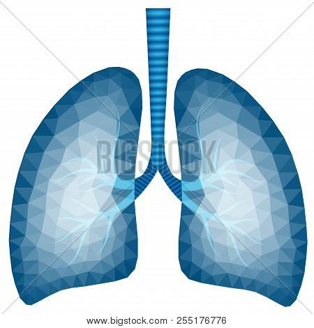 Abstract Polygonal Image Of Human Lungs In Blue Tone - Vector Illustration