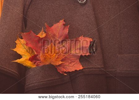 Autumn Leaves In Pocket Of Coat. Selective Focus.