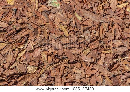 A Beautiful Horizontal Texture Of Brown Bark Of Conifer Tree With Knots And Cracks For Mulching Of S