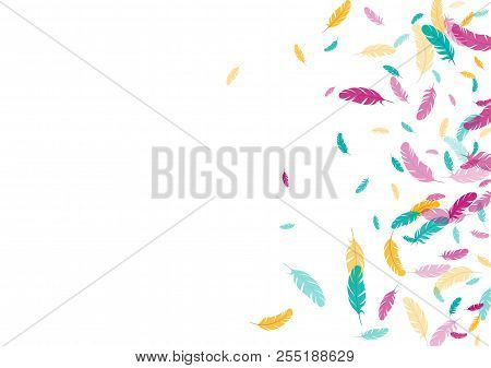 Feather Ethnic Background Vector Print.  Decorative Background With Plumelet. Flying Feather Element