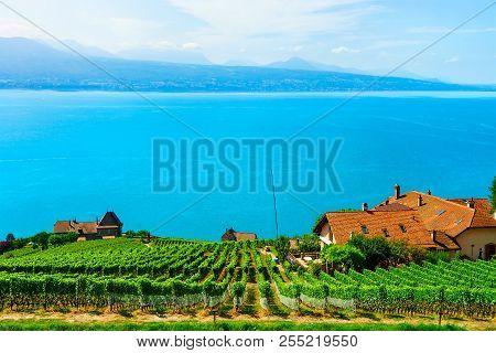 Lavaux, Switzerland - August 30, 2016: Chalets Near Vineyard Terrace Hiking Trail Of Lavaux, Lake Ge