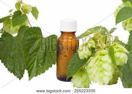 Natural Medicine  -  Geen Hops &  Brown Bottle.  Alternative Medicine, Brown Bottles & Hops.