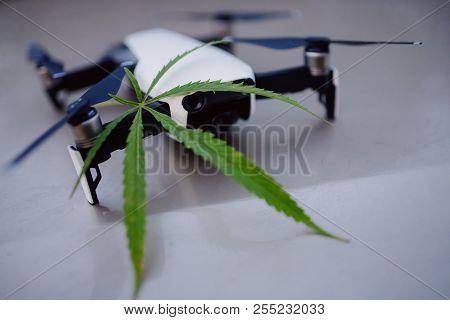Delivery Cannabis Marijuana Hemp With Help Of Drone Through Air Across Border. Concept Of Dealer Con