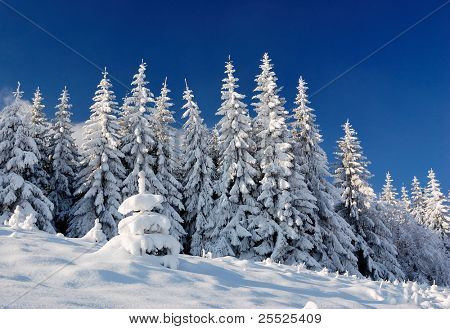 Winter landscape with snow in mountains Carpathians, Ukraine