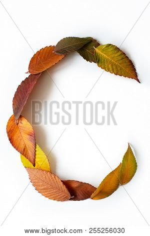 Letter C of colorful autumn leaves. Character C mades of fall foliage. Autumnal design font concept. Seasonal decorative beautiful type mades from multi-colored leaves. Natural autumnal alphabet.