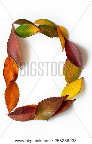 Letter D of colorful autumn leaves. Character D mades of fall foliage. Autumnal design font concept. Seasonal decorative beautiful type mades from multi-colored leaves. Natural autumnal alphabet.