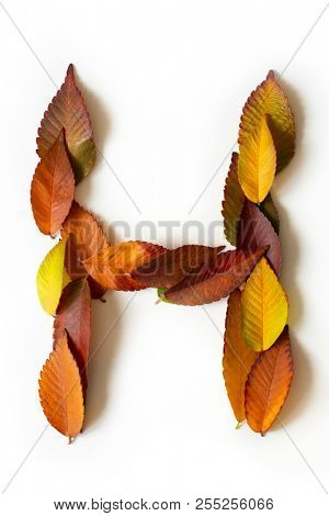 Letter H of colorful autumn leaves. Character H mades of fall foliage. Autumnal design font concept. Seasonal decorative beautiful type mades from multi-colored leaves. Natural autumnal alphabet.