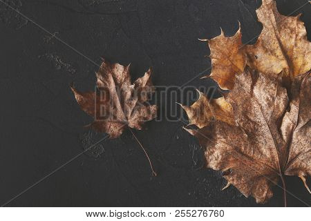 Fall Season Background, Brown Maple Leaves On Black Stone Background With Copy Space. Autumn, Fall,