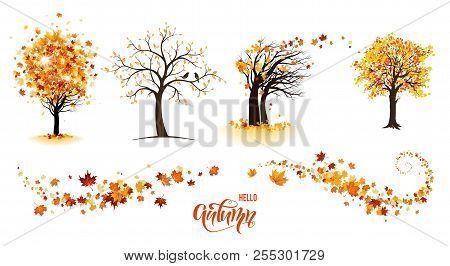 Autumn Nature Design Elements. Tree, Branch With Leaves, Fall Decor. Maple Leaves Design.