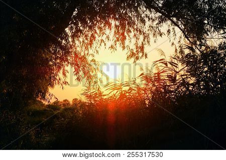 Sunset Sky Dark Landscape With Frame From Trees