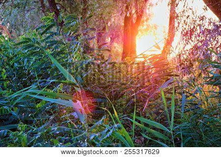 Landscape, Sunny Dawn In A Green Field