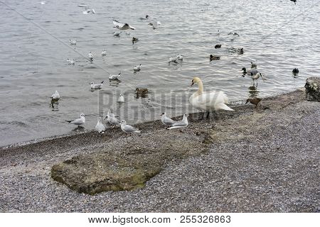 Various Birds And At Sea Or Lake Shore In Winter