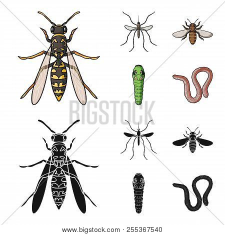 Worm, Centipede, Wasp, Bee, Hornet .insects Set Collection Icons In Cartoon, Black Style Vector Symb