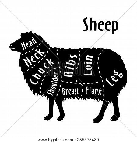 Cut Of Sheep, Diagram For Butcher. Sheep Cut Diagram