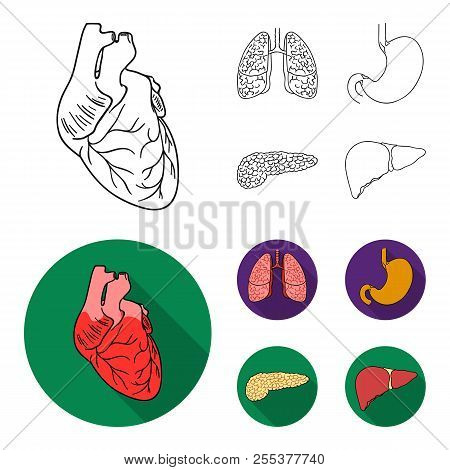 Heart, Lungs, Stomach, Pancreas. Human Organs Set Collection Icons In Outline, Flat Style Vector Sym