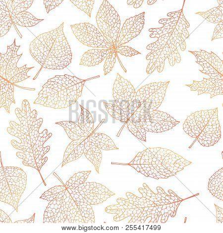 Vector Autumn Seamless Pattern With Oak, Poplar, Beech, Maple, Aspen And Horse Chestnut Leaves Outli