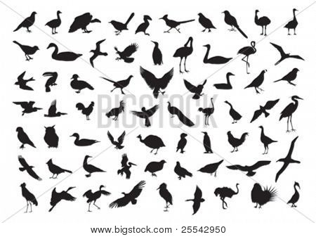 Birds silhouettes isolated on white. Vector illustration.