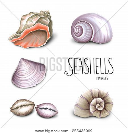 Collection Of Seashells On White Background. Sketch Done In Alcohol Markers. You Can Use For Greetin
