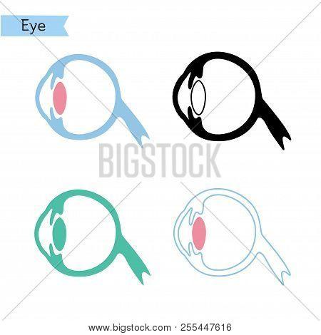 Vector Isolated Illustration Of Eye Anatomy. Human Ocular System Icon. Healthcare Medical Center, Su