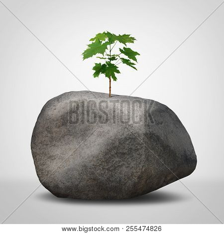 Challenge Concept As A Business Struggle Metaphor As A Green Plant Sapling Growing From An Infertile