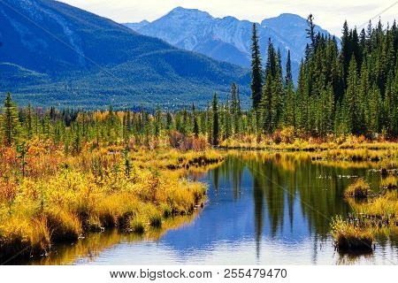 Fall Color In The Mountains Near Vermillion Lakes In Banff National Park