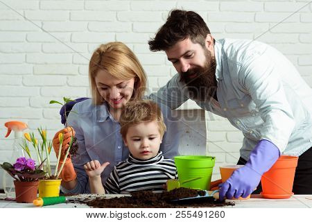 Mom, Dad&son Planting Flowers At Home. Little Gardener Boy With Mother&father. Work For Whole Family