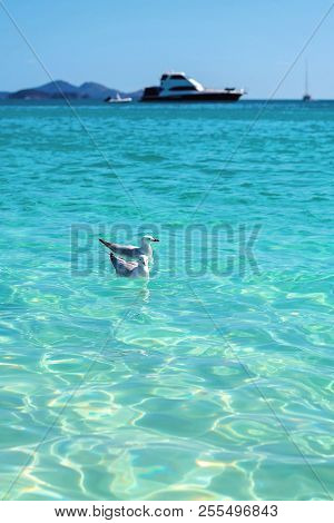 Seagulls Swimming In Front Of Tourist Boats In The Blue Water Of Whitehaven White Silica Sand Beach