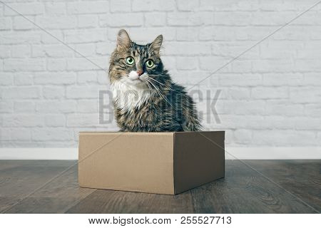 Cute Longhair Cat Sitting In A Cardboard Box And Looking Sideways.