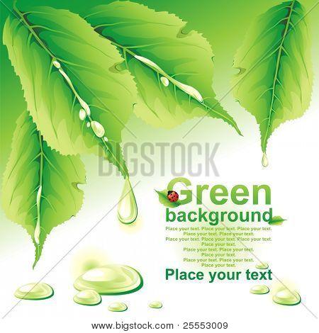 Green background. (vector illustration)