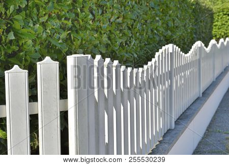Close On White Fence Along A Green Hedge Of An Urban Backyard
