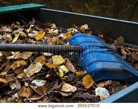 On A Pile Of Yellow Autumn Fallen And Collected In A Pile Of Leaves Lies A Large Blue Shovel