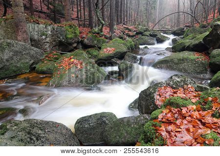 Brook In The Autumn Forest - Flowing Water