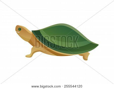 Tortoise Pet Shop Animal With Scaly Or Leathery Domed Shell, Shielding From Predator, Turtle Slow-mo