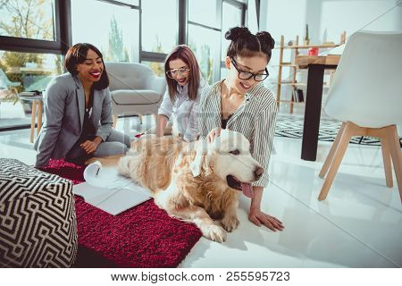 happy multiethnic businesswomen petting furry dog while sitting on the floor at office poster