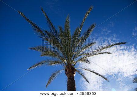 Beautiful palm tree against a blue sky