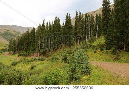 Summer In La Plata Canyon In Durango, Co
