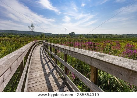 Section Of The Appalachian Trail Boardwalk In Pawling, New York