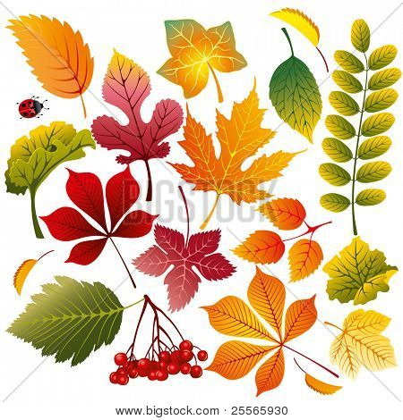 collection of various autumn leaves, wonderful elements to your design