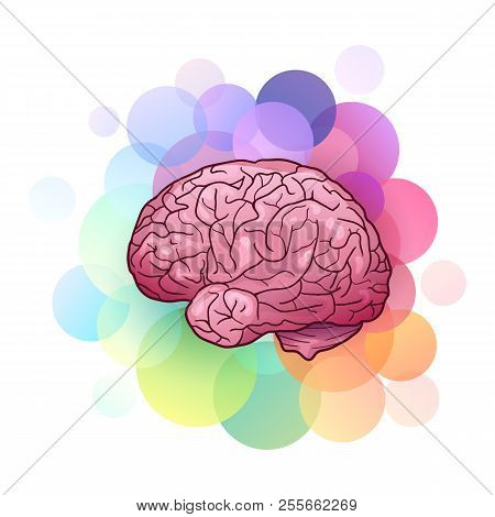 Cartoon Illustration Of Human Brain With Highlights And Shadows With Colorful Circles. Side View. Cr