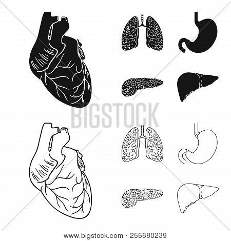Heart, Lungs, Stomach, Pancreas. Human Organs Set Collection Icons In Black, Outline Style Vector Sy
