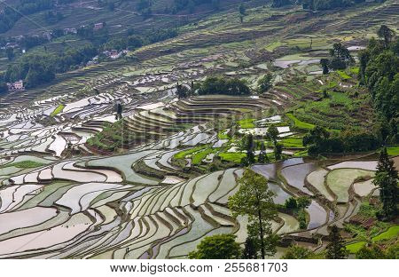 Terraced Rice Fields In Yuanyang County, Yunnan, China. Yuanyang County Lies At An Altitude Ranging