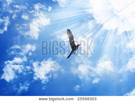 Bird flying to the sun