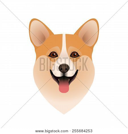 Isolated Colorful Head Of Happy Welsh Corgi Pembroke Or Cardigan On White Background. Flat Cartoon B