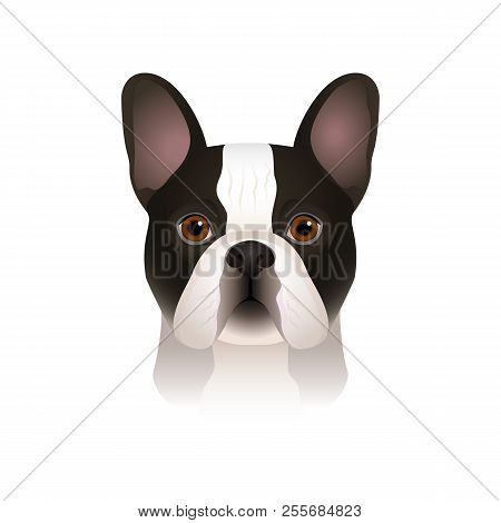 Isolated Colorful Head Of Spotty French Bulldog On White Background. Flat Cartoon Breed Dog Portrait